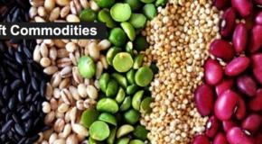 Мировые сырьевые и продуктовые рынки в 2016 году